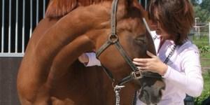Ingrid De Boelpaep – Steenhuffel - paardenosteopaat